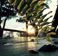 Чем можно заразиться на отдыхе в таиланде