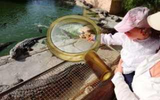 Стоит ли ехать с детьми в тунис