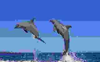 Есть ли на кубе дельфинарии