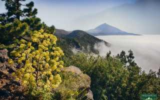 Чем заняться на вулканическом острове на тенерифе