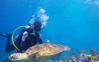 Остров хайнань превосходное место отдыха туризм в китае