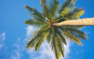 Острова мальдив какой лучше как выбрать