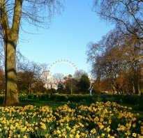 Зачем стоит ехать в лондон рассказы о лондоне