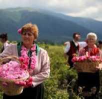 Долина роз rose valley болгария казанлык
