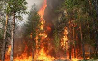 Как вести себя во время лесного пожара