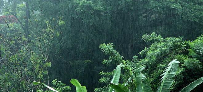 Температура воды в негомбо