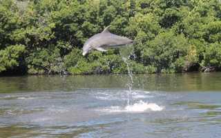 Дельфинарий dolphinarium in varadero куба варадеро